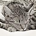 Sleeping Tabby by Tom Gowanlock