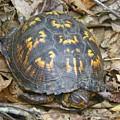 Sleeping Turtle by Gary Morgan