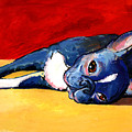 Sleepy Boston Terrier Dog  by Svetlana Novikova