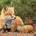 Sleepy Fox by Martina Schneider