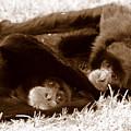 Sleepy Monkeys by Brad Scott
