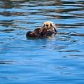 Sleepy Otter by Erin Finnegan