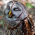 Sleepy Owl by Donna Proctor