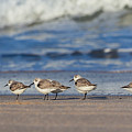 Sleepy Shorebirds by Michelle Constantine