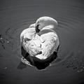 Sleepy Swan by Cheryl Baxter