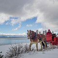 Sleigh Ride by Martin Gollery