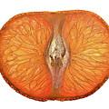 Slice Of A Mandarin Orange by  Onyonet  Photo Studios