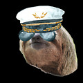 Sloth Aviator Glasses Captain Hat Sloths In Clothes by Trisha Vroom
