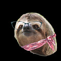 Sloth Black Glasses Red Scarf Sloths In Clothes by Trisha Vroom