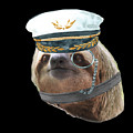 Sloth Monacle Captain Hat Sloths In Clothes by Trisha Vroom