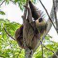 Sloth1 by Olga Photography
