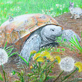 Slow And Steady by Becky Brooks