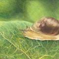 Slow And Steady by Shana Rowe Jackson