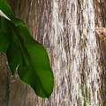 Slow Motion Tropical Waterfall by Susan Molnar
