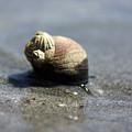 Slow Traveler by Becca Brann