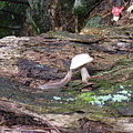 Slug And Mushroom by Alison Heckard