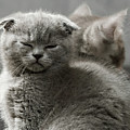 Slumbering Cat by Evgeniy Lankin