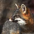 Sly As A Fox by Karol Livote