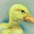 Sly Little Duckling by MM Anderson