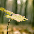 Small Branch With Yellow Leafs Close-up by Vlad Baciu