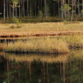 Small Forest Lake In Autumn by Kerstin Ivarsson