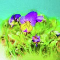 Small Group Of Violets by Rusty R Smith