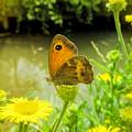Small Heath Butterfly by Valerie Anne Kelly