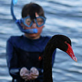 Small Human Meets Black Swan by Carolyn Parker