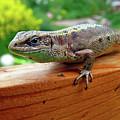 Small Lizard by Alex Galkin
