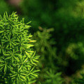Small Plants by Que Siam