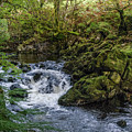 Small River Cascade Over Mossy Rocks In Northern Wales by Sallye Wilkinson