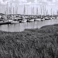 Small Sailboat Harbor Monochrome  by Kathy Clark