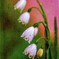 Small Signs Of Spring by Terry Davis
