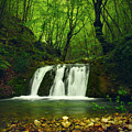 Small Waterfall In Forest by Sandra Rugina