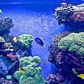 Smaller Fish In Monterey Aquarium-california  by Ruth Hager