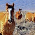 Smile - Mustang Mares Of Eastern Sierra  by Kim Hawkins Eastern Sierra Gallery