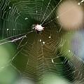 Smiley Spider Web  by Mesa Teresita