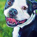 Smiling Boston Terrier by Robert Phelps