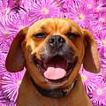 Smiling Pug by Amy Vangsgard
