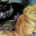 Smoke And Orange Persians by W Luker Junior