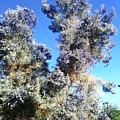 Smoke Tree In Bloom With Blue Purple Flowers by Jay Milo