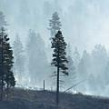 Smokey Trees by Greg Vaughn - Printscapes