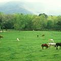 Smokies Horses by John Burk