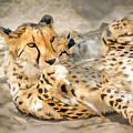 Smokin Cheetah Love by LeeAnn McLaneGoetz McLaneGoetzStudioLLCcom