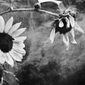 Smoking Sunflowers by Sari Sauls