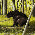 Smoky Mountain Bear by Mary Ann King