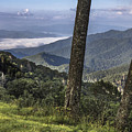 Smoky Mountain Ridge  by John McGraw