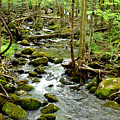 Smoky Mountain Stream 1 by Nancy Mueller