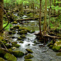 Smoky Mountain Stream 2 by Nancy Mueller