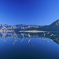 Snags- Lake Isabella by Soli Deo Gloria Wilderness And Wildlife Photography